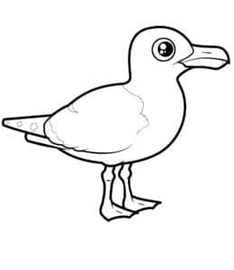маленькая чайка