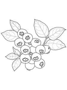 гроздь черники
