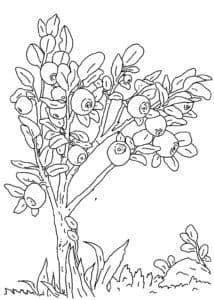 дерево черника