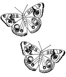 две бабочки раскраска