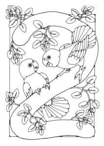 две птички раскраска