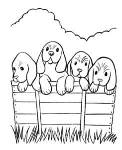 четыре собачки раскраска