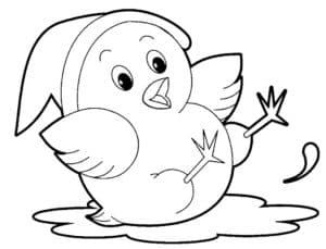 цыпленок в луже
