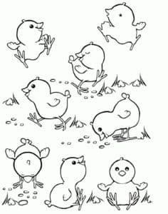 маленькие цыплята на полянке