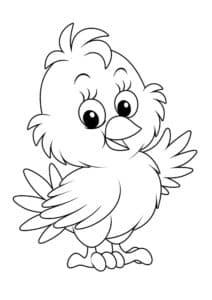 цыпленок пушистый