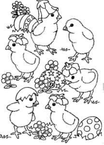 цыплята играются