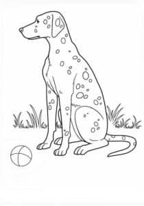 далматинец с мячом