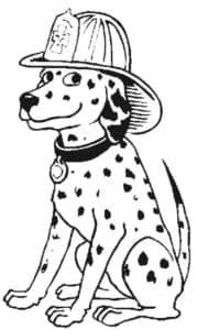 далматинец в шляпе
