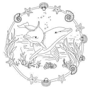 дельфины и водоросли