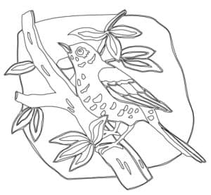 птичка дрозд