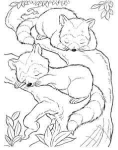 еноты спят на дереве