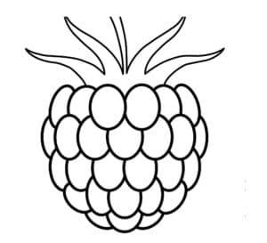 ягода ежевика