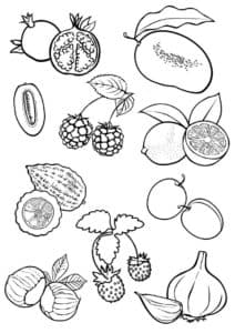 фрукты раскраска красивая