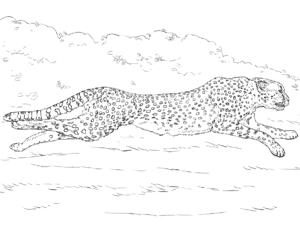 детская раскраска гепард