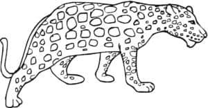 картинка гепард