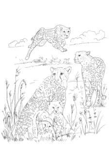 животные гепарды