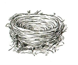 раскраска гнездо