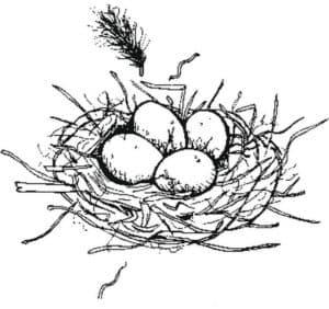 яйца в гнезде раскраска