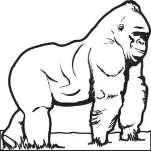 раскраска горилла