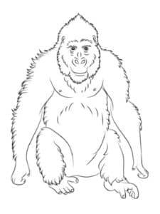 пузатая обезьянка