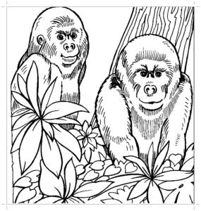 маленькие гориллы