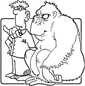 горилла и человек