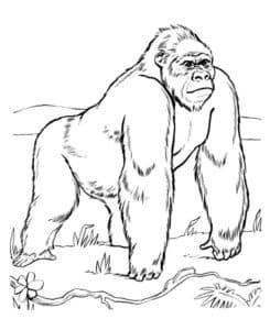 сильная горилла