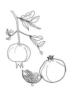 вкусный фрукт гранат