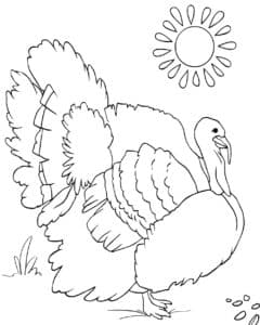 индюк и солнце