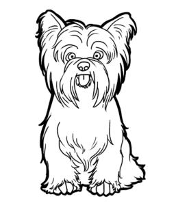 собака йорк