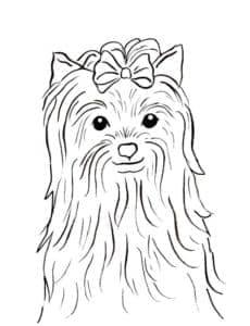 мордочка собаки йорк