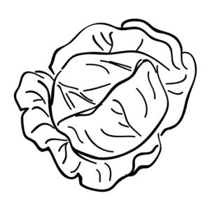 детская раскраска капуста
