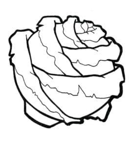 большой кочан капусты раскраска