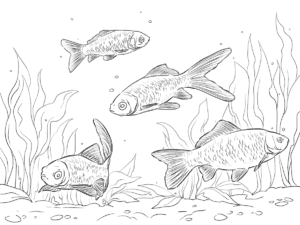 караси под водой