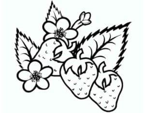 клубника и цветочки