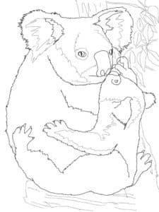 коала кормит малыша