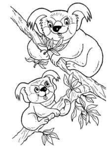 две коалы