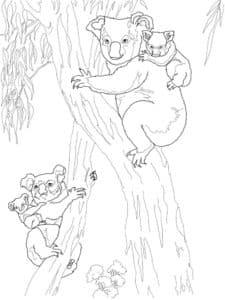 коалы на дереве раскраска