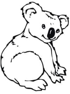 ребенок коала