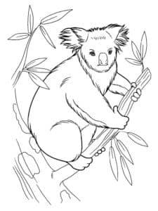 зверек коала раскраска