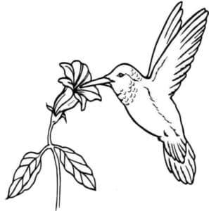 колибри кушает