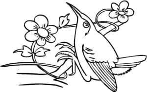 мультяшная колибри