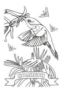 детская раскраска колибри