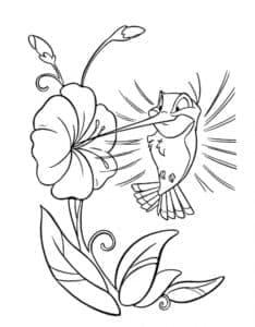 птичка колибри и цветок