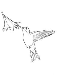 красивая маленькая птичка