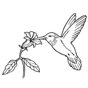колибри ест из цветка