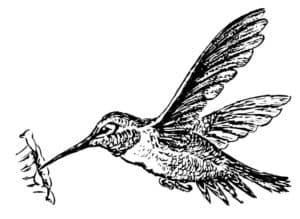 колибри антистресс
