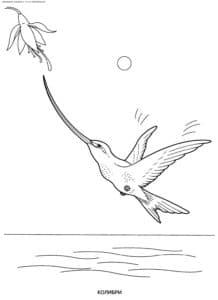 колибри с длинным носом