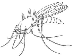 комар с жалом