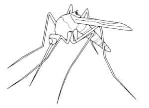 комар детская раскраска